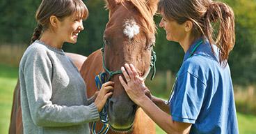 Pferdehalter bruachen Opti-Ration