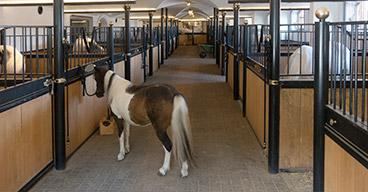 Pferdebetriebe nutzen Opti-Ration