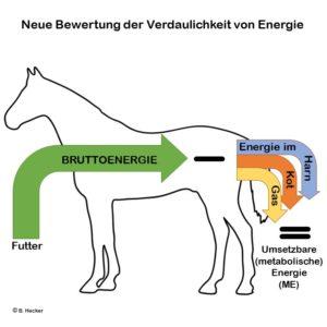 Neue Bewertung der Verdaulichkeit von Energie beim Pferd