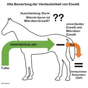 Alte Bewertung der Verdaulichkeit von Eiweiß beim Pferd bei Opti-Ration