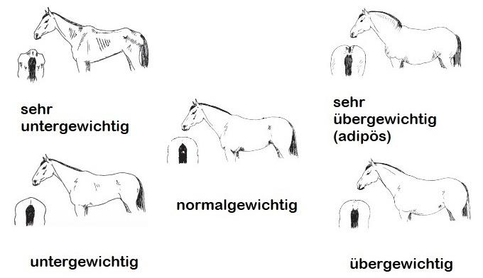 Ernährungszustand Pferd opti-ration.de