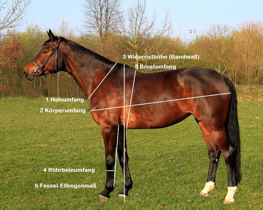 Hinweise zum Vermessen eines Pferdes, um das Gewicht zu bestimmen von Opti-Ration
