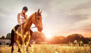 Rationsberechnung Pferd online Opti-Ration