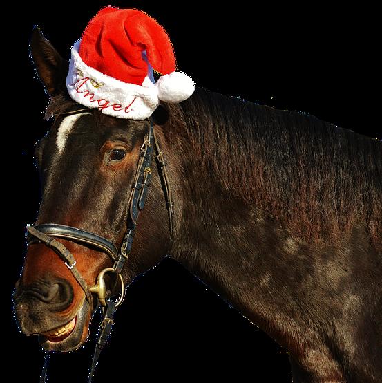 Pferd Weihnachten